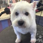 murphys-mutts-dog-grooming-1