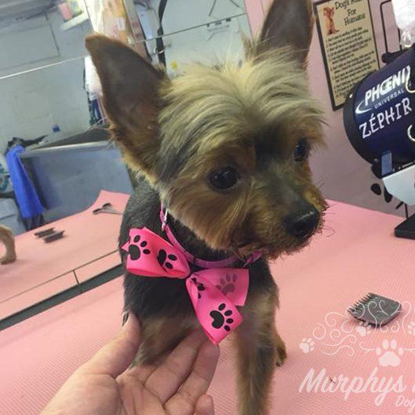 murphys-mutts-dog-grooming-11