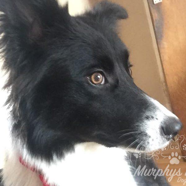 murphys-mutts-dog-grooming-15