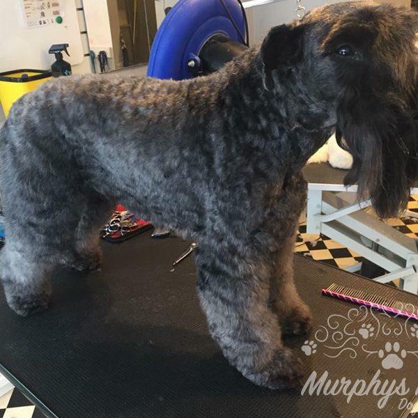 murphys-mutts-dog-grooming-16