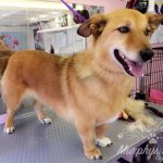 murphys-mutts-dog-grooming-18