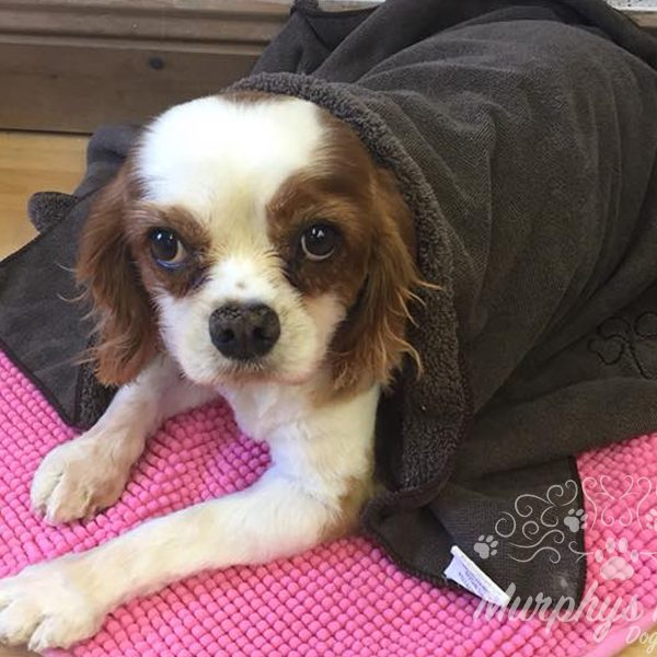 murphys-mutts-dog-grooming-19