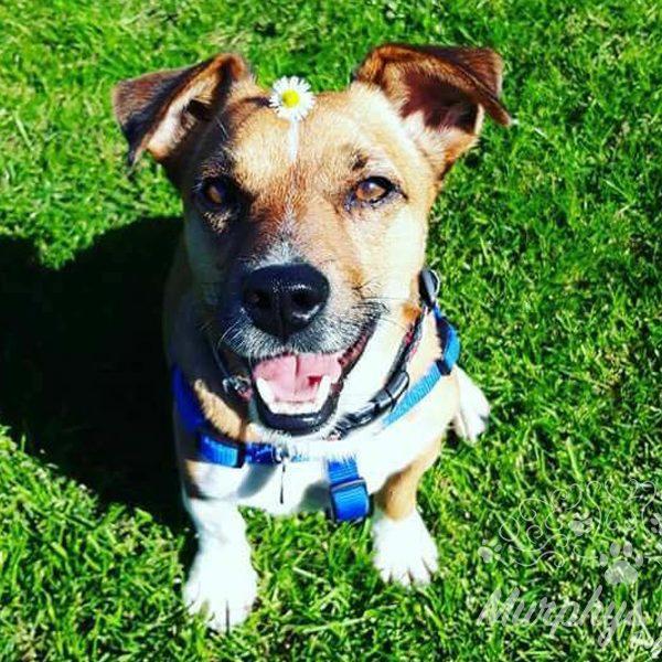 murphys-mutts-dog-grooming-2