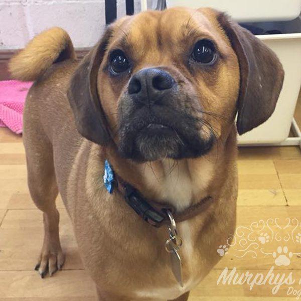 murphys-mutts-dog-grooming-20