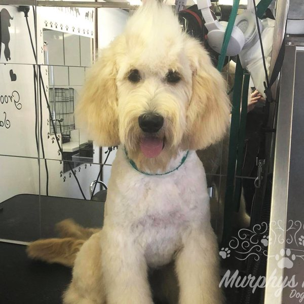 murphys mutts dog grooming