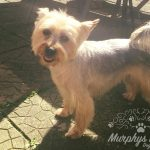 murphys-mutts-dog-grooming-4