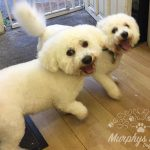 murphys-mutts-dog-grooming-5
