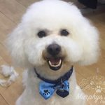 murphys-mutts-dog-grooming-6