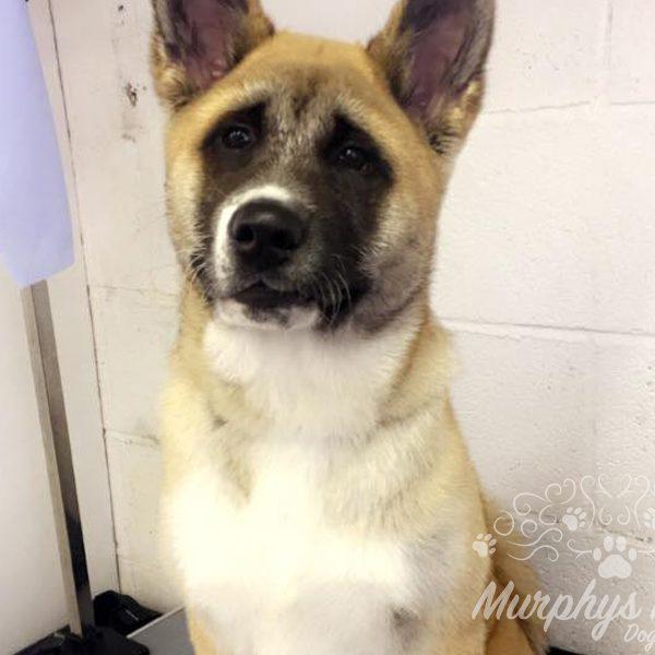 murphys-mutts-dog-grooming-7