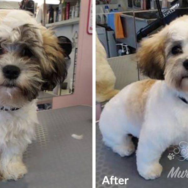 murphys-mutts-dog-grooming-bf-10
