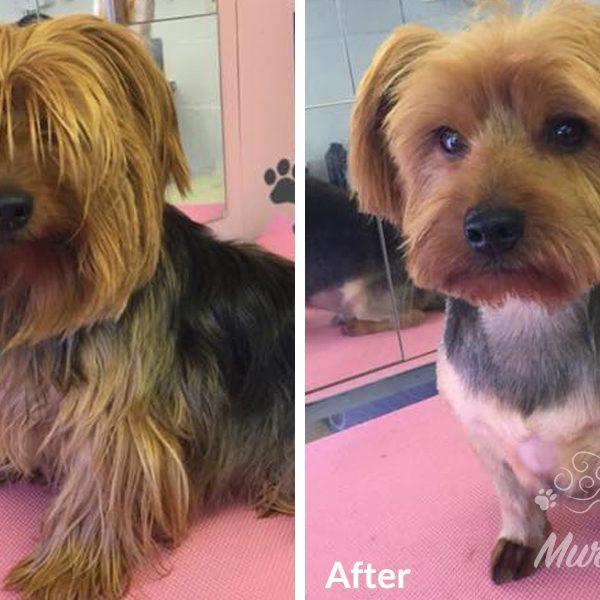 murphys-mutts-dog-grooming-bf-2