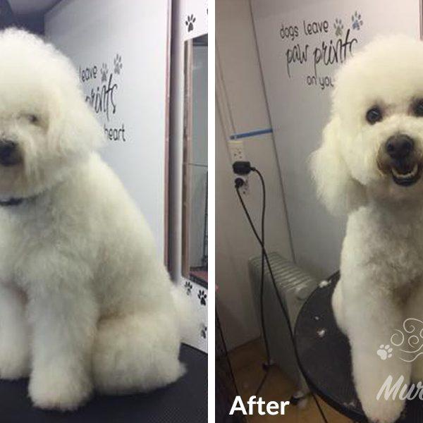 murphys-mutts-dog-grooming-bf-5