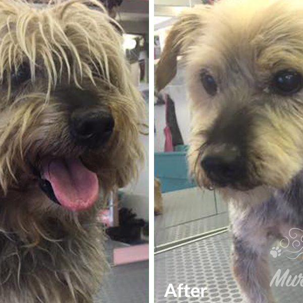 murphys-mutts-dog-grooming-bf-6