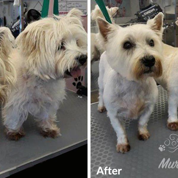 murphys-mutts-dog-grooming-bf-9